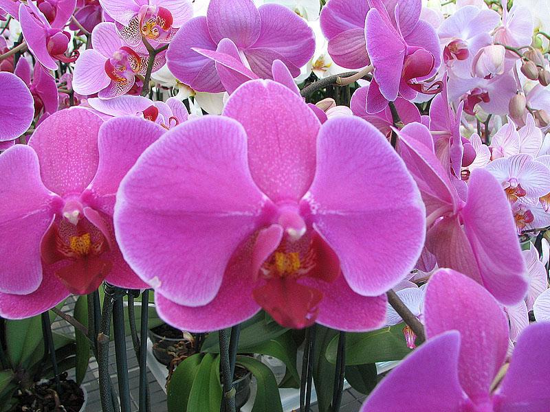 Virágos Muravidék